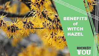 The Surprising Benefits of Witch Hazel | Richest You Health