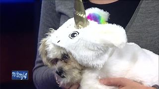 Ask the Expert: Pets and trick-or-treating - Video