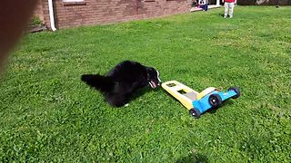 Collie Loves His Lawnmower - Video