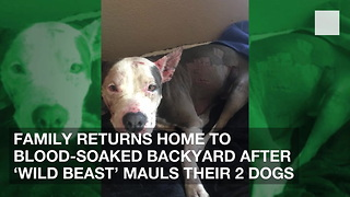 Family Returns Home to Blood-Soaked Backyard after 'Wild Beast' Mauls Their 2 Dogs - Video