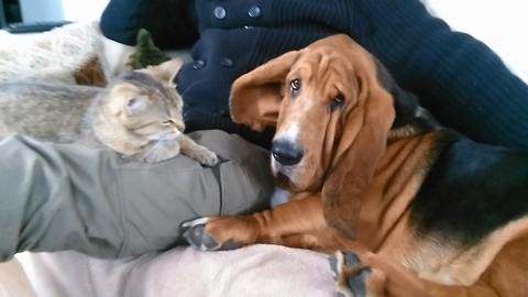 A funny dog fights for the love of a lord with a cat