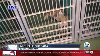Palm Beach County Animal Care and Control cannot accept A/C units - Video
