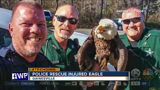 Gainesville police rescue injured eagle - Video