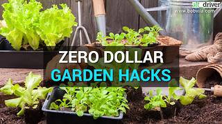 Quick and easy gardening tips | Rare Life - Video