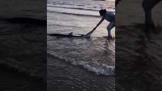 Locals Return Stranded Shark Back Into Ocean After Beach Closures - Video