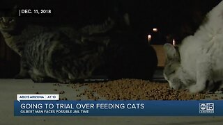 A Gilbert man facing possible jail time for feeding feral cats