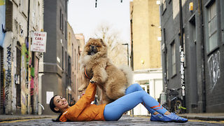 Beautiful chow chow looks like snuggly teddy bear - Video