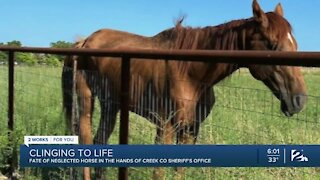 Fate of neglected horse in the hands of Creek Co. Sheriff's Office