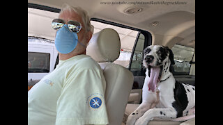 Great Danes Share Smiles At Florida Drive Thru Covid Vaccine