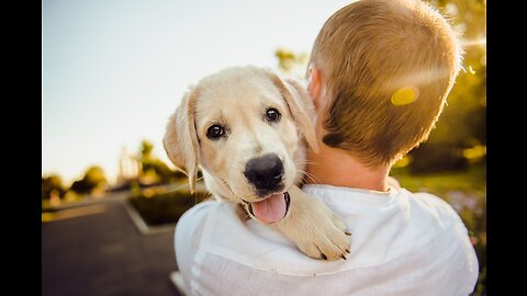 Free, low-cost adoptions in Las Vegas valley on Saturday