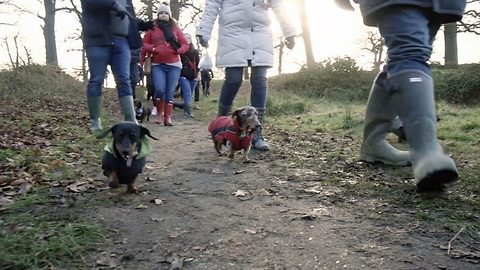 Everyone's a weiner – Hundreds of adorable dachshunds descent on London parks in weekly sausage dog party that unites a community of owners