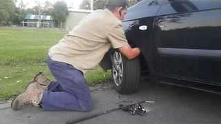 Snake Catcher Rescues Red Bellied Black Snake From Car Wheel - Video