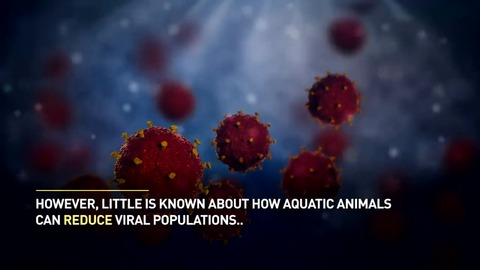 Millions of viruses in the ocean are kept in balance by various sea animals