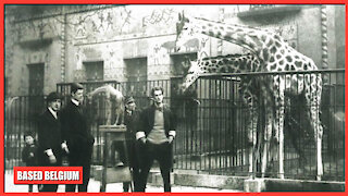 The Antwerp ZOO Build by King 'Leopold II, The Great' is the 7th oldest animal park in the world