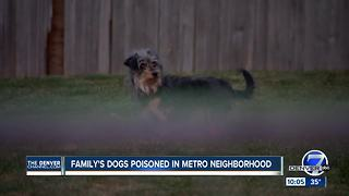 Family's dogs poisoned in metro neighborhood - Video