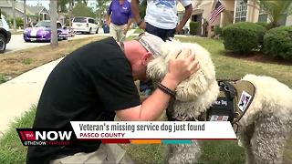 Missing service dog found after search