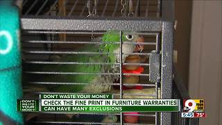 Beware: Your pet parrot could void your extended warranty - Video