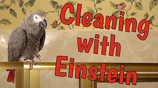 Parrot provides hilarious housekeeping entertainment