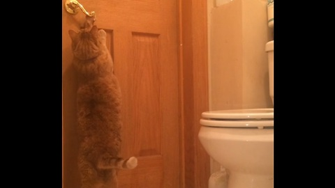 Cat learns how to open door with ease
