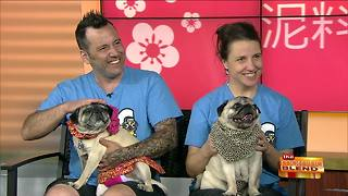 The 14th Annual Milwaukee Pug Fest
