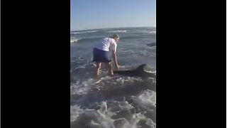 Heroic Children Save Washed Up Dolphin In Spain - Video