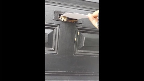 Cat Protects His House From A Vicious Fiend In The Form Of Spam Mail
