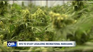 New York to study legalizing recreational marijuana