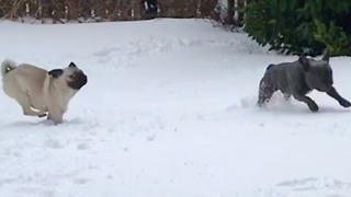 These Dogs Reveled In Their First Snow Experience