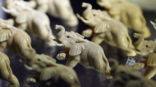 Zimbabwe Investigates Former First Lady For Ivory Smuggling