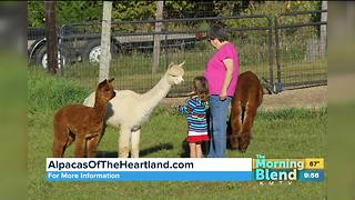 Alpacas of the Heartland - Video