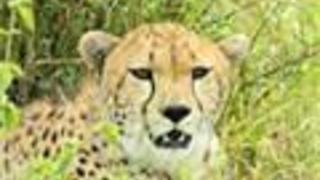 Africa Animal Photos - Video