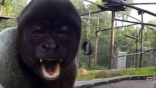 Monkey Pulls Funny Faces for Camera - Video