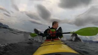 Kayaker surprised by pod of whales