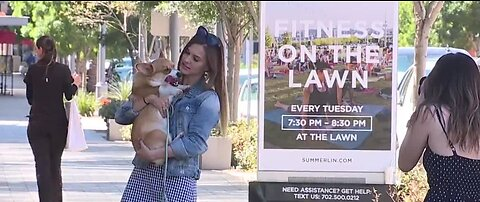 Dogs of Downtown Summerlin