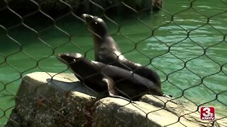 Omaha Zoo previews new sea lion exhibit