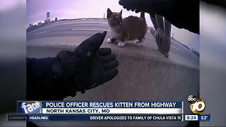 Police officer rescues kitten from Missouri freeway