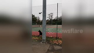 Squirrel in London park makes spectacular leap to avoid pair of dogs