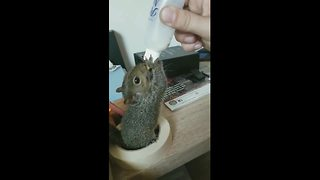 Baby squirrel nursed back to health after Hurricane Irma - Video