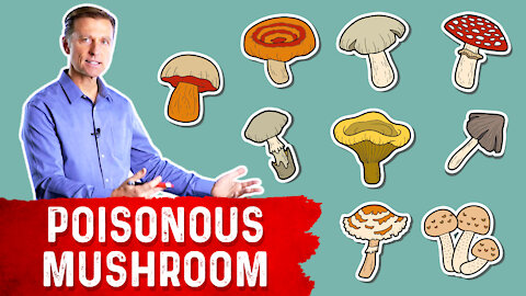 The Most Deadly Mushroom and it's Antidote