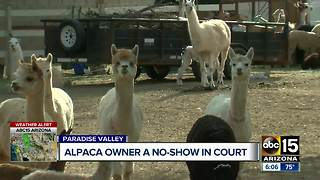 Alpaca owner no-show in court, neighbors want animals moved - Video