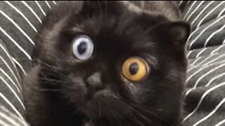 Cat's hypnotic eyes are a viral sensation!