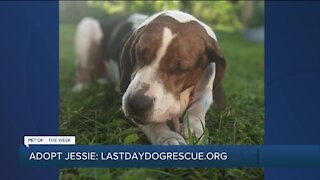 Pet of the Week: Meet Jessie