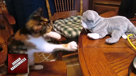 "Kung fu kitten battles ""threatening"" stuffed animal"