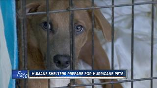 Wisconsin Humane Society needs foster parents for first batch of animals displaced by Harvey - Video