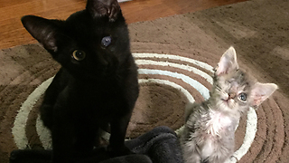 Two one-eyed orphaned special needs kittens become best friends - Video
