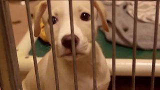 California law says pet shops can only sell rescue animals - Video