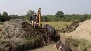 Four elephants rescued after falling into well in Sri Lanka - Video