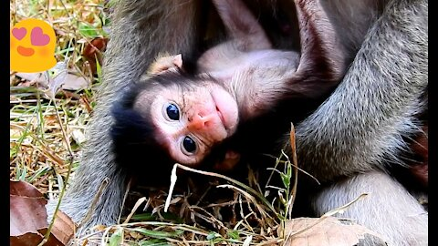 Small baby monkey looking with wounder when mother carry him like this