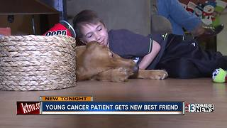 Young cancer patient gets new best friend - Video