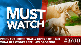 Pregnant Horse Finally Gives Birth, But What Her Owners See, jaw dropping